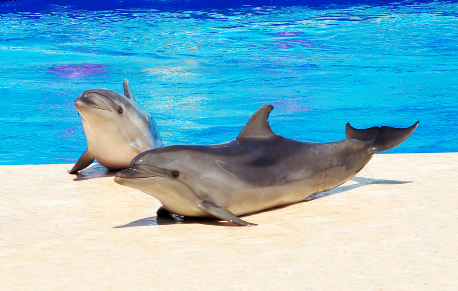 The Forgotten Dolphins of SeaWorld: How We're Fighting to Take Down Marine Captivity for Good