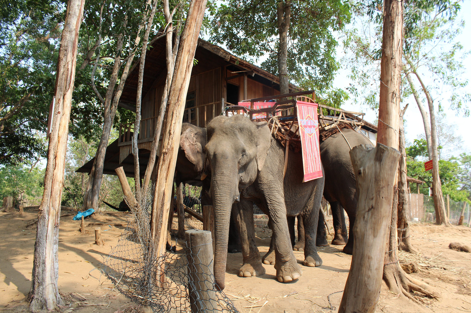 How We're Helping Abused Captive Elephants