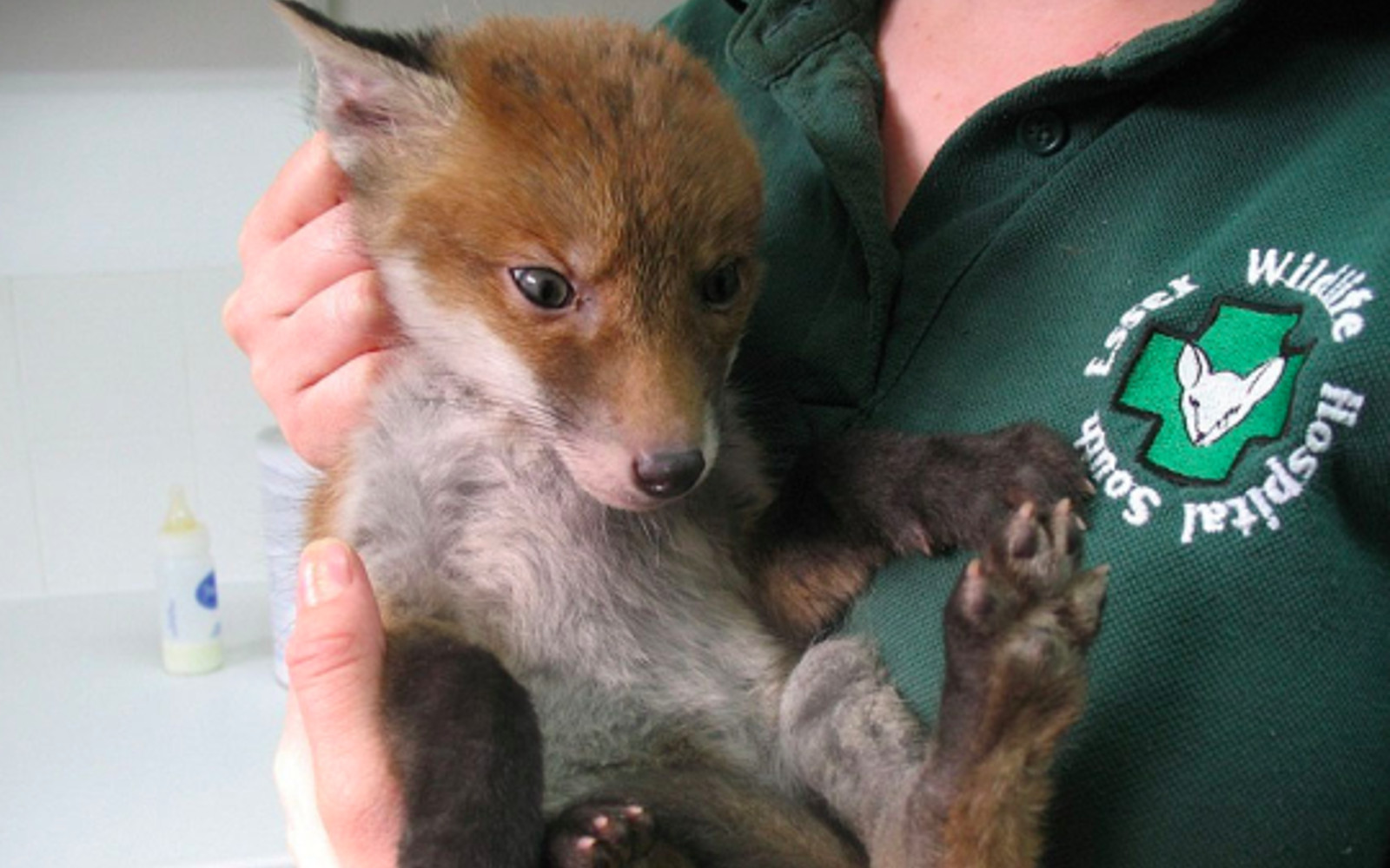 Lucky Baby Fox Rescued After Being Discovered in a Hole at a Construction Site (PHOTOS)