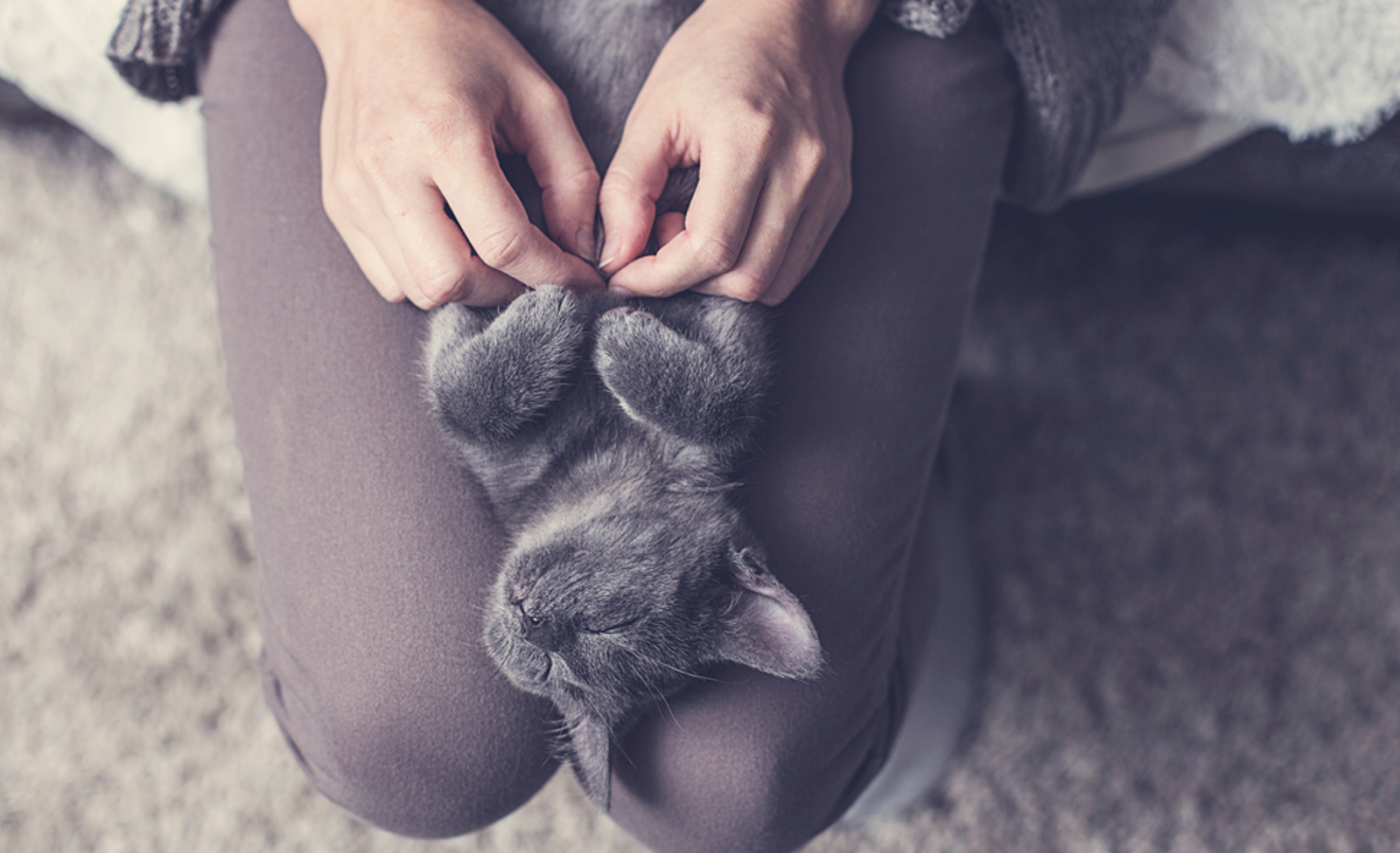 5 (Not-So-Secret) Signs Your Cat Loves You