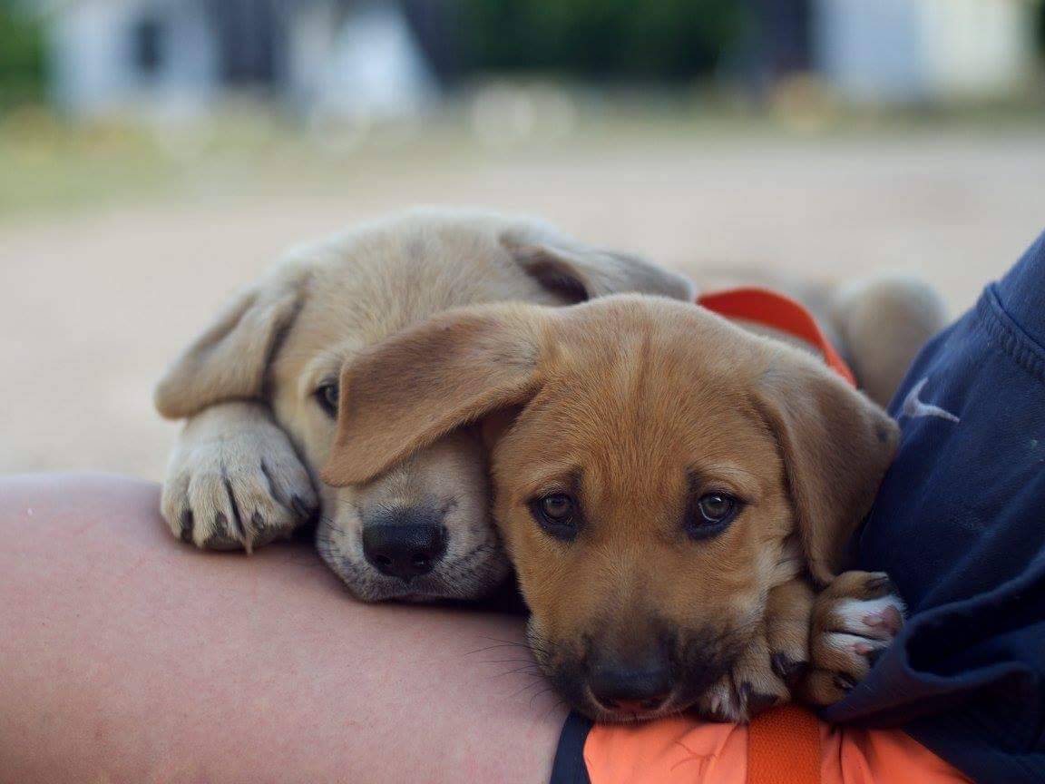 3 Incredible Organizations Dedicated to Helping Rescue Stray Dogs