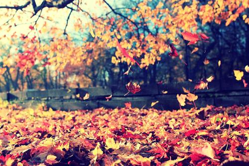 shutterstock_298140752 leaves falling