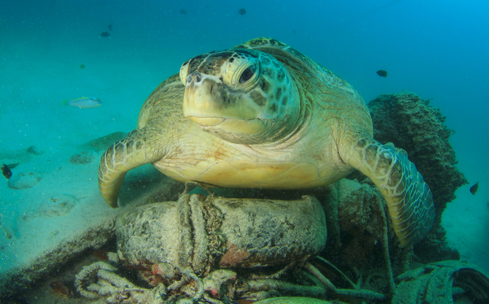 3 Shocking Stats About Marine Plastic - And How You Can Help