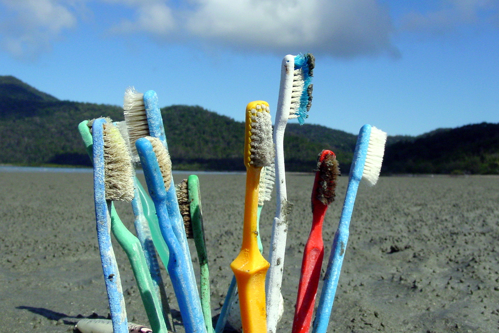 5 Daily Habits That Negatively Impact Wildlife