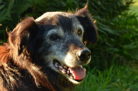 Go-to Things to Keep in Your Home If You Have a Senior Pet