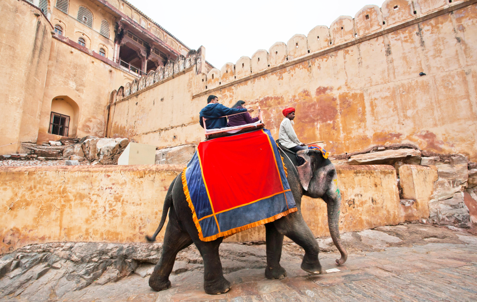 Elephants are Being Abused for Tourist Rides in India – Here's How You Can Help Stop the Suffering