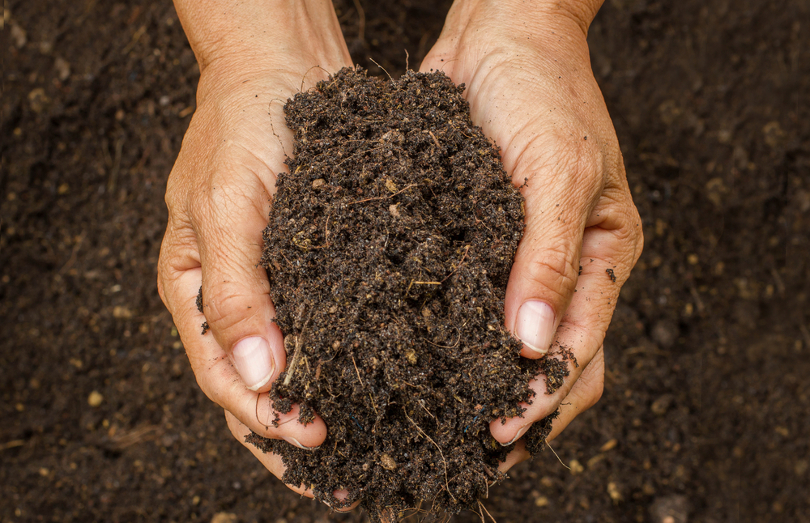 Why Good Soil Makes Healthy Food, Something We Unfortunately Aren't Getting