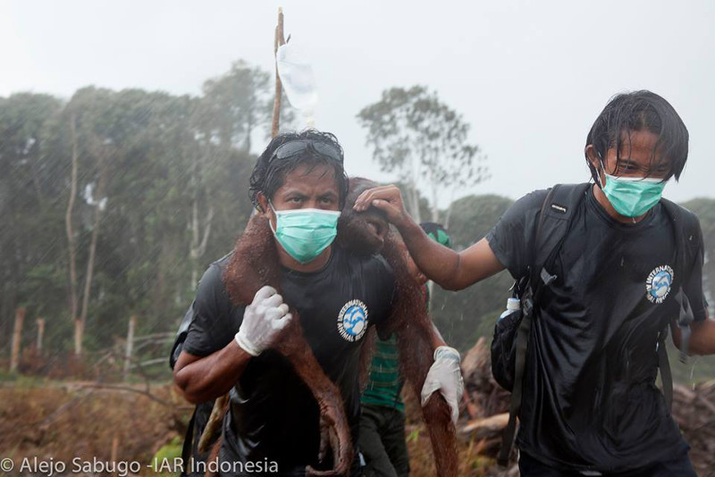 Moving Photo Shows the Dedication of Two Men Who Rescued an Orangutan in Dire Straits