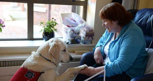How Organizations Are Using Therapy Dogs to Help People Through Difficult Times