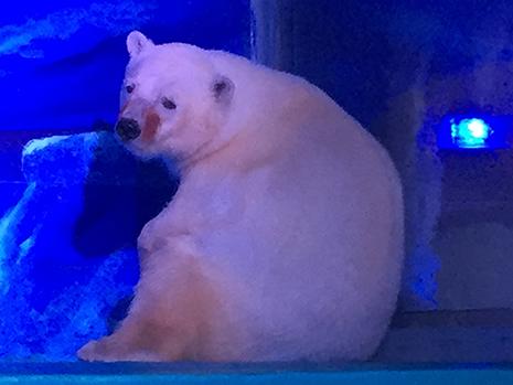 Polar Bear story