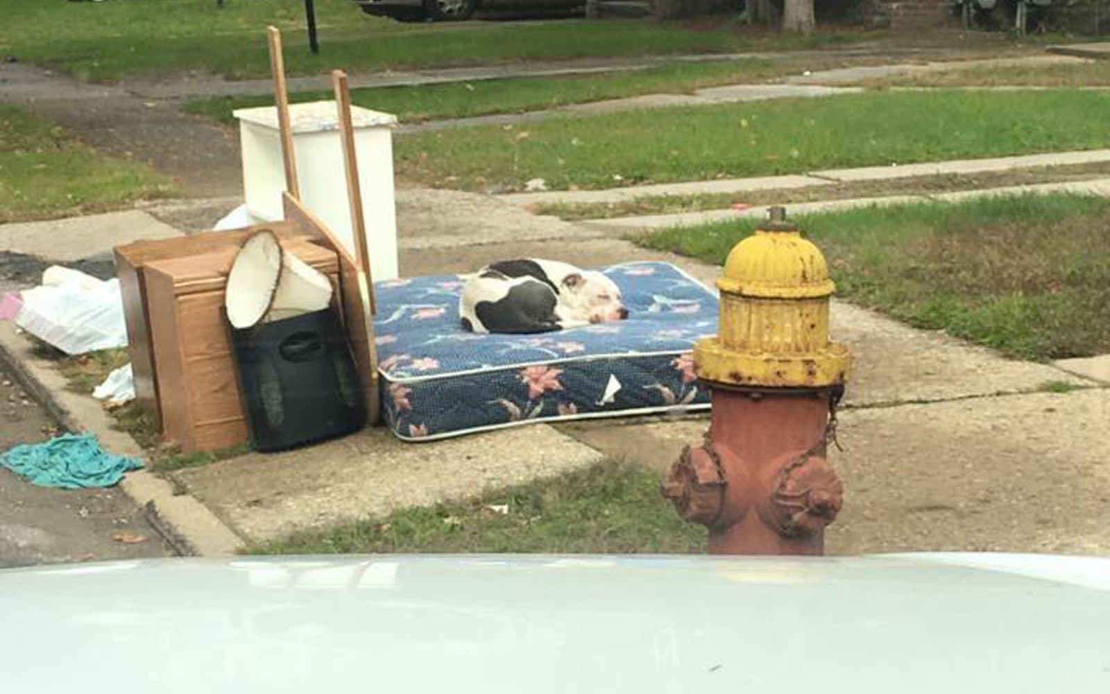 When This Dog's Family Moved and Left Their Unwanted Belongings on the Curb, He Stayed There and Waited With It