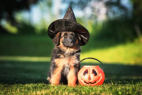 Dog dressed up for Halloween
