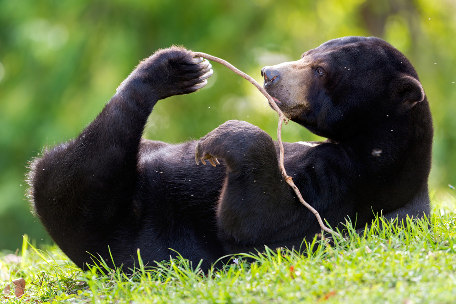 How Grassroots Work to End Bear Bile Farming is Helping Vietnam Stop the Cruelty for Good