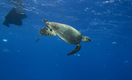 Here's What Happens When Marine Animals Eat Plastic – and Why You Should Cared