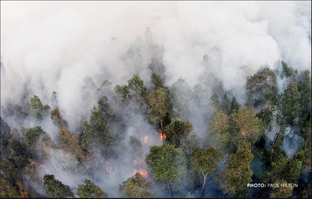 Climate Emissions for palm_Paul Hilton_Tyson15