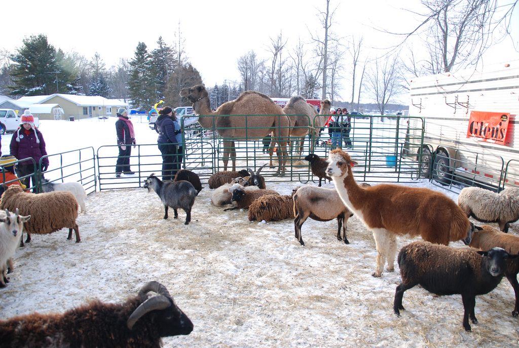 Why Petting Zoos are a Terrible Way to Teach Children About Animals