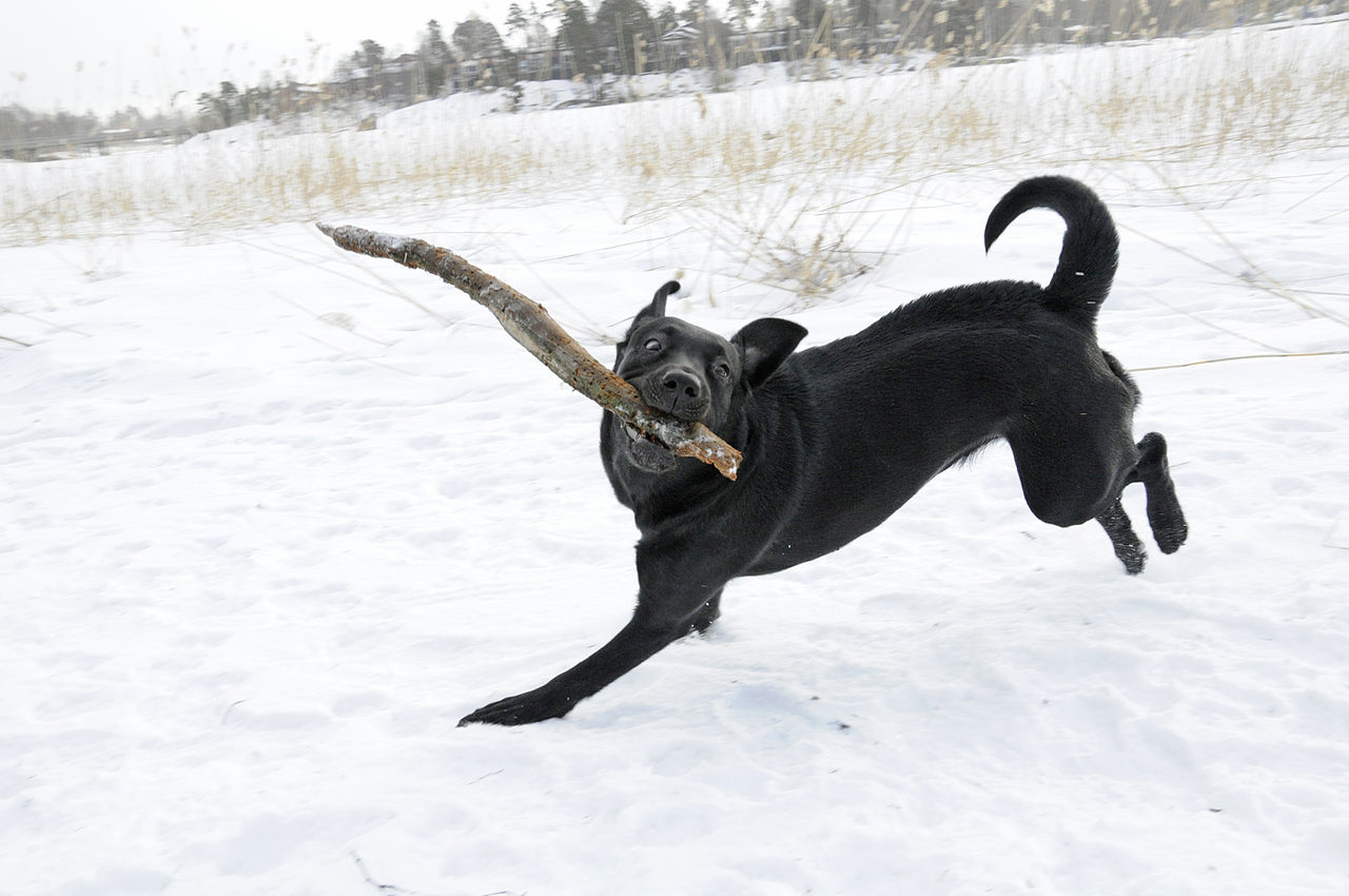 5 Winter Safety Tips for Pets
