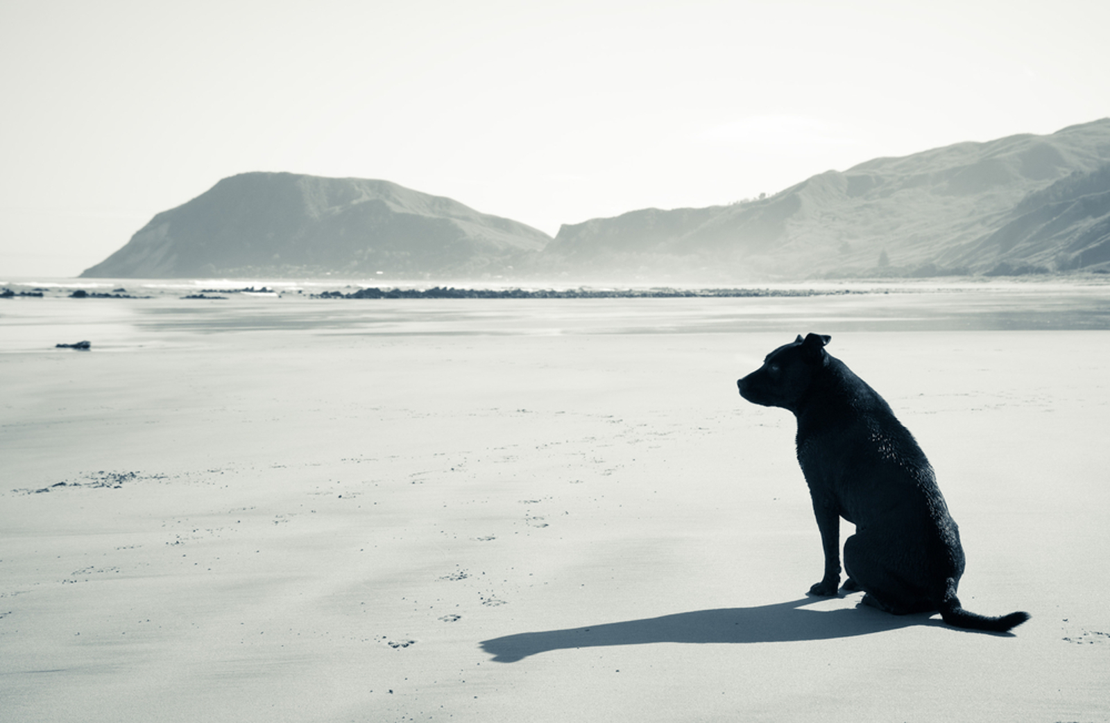 What To Do When Friends and Family Don't Understand Pet Loss