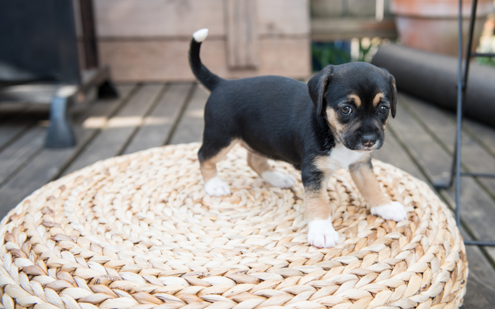 Easy Tips to Pet Proof Your Home to Make Sure All Your Furry Friends Stay Safe