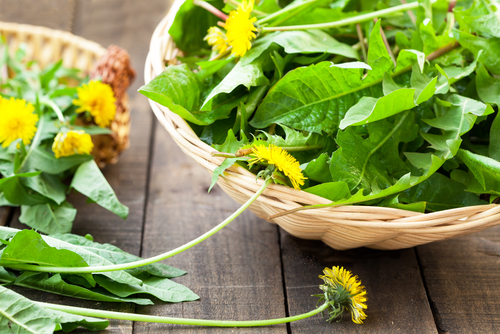 Dos and Don'ts of Food Foraging and Living to Tell the Tale