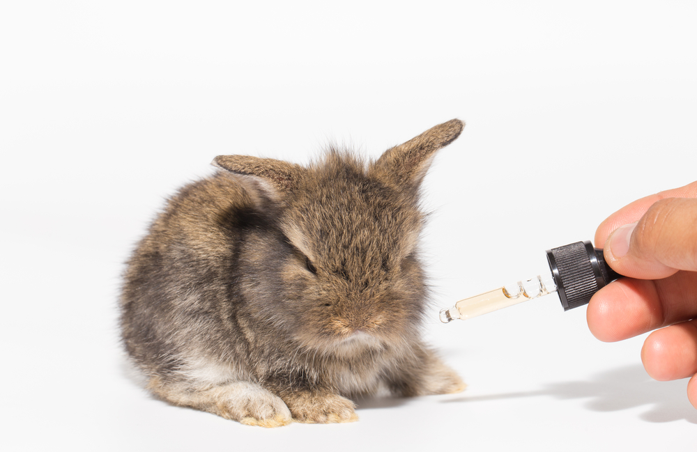 How to Start Using More Cruelty-Free Beauty Products