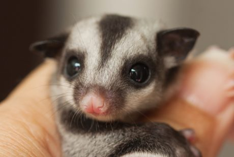 How Our Obsession with Pocket Pets Fuels the Exotic Pet Trade