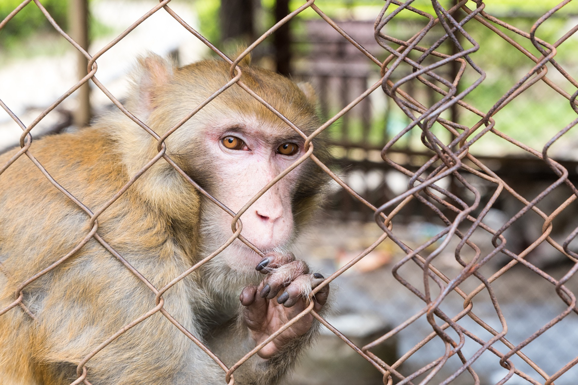 What You Need to Know About Roadside Zoos