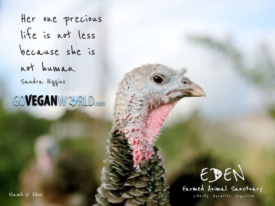 Go-Vegan-World-Scotland-billboard (1)