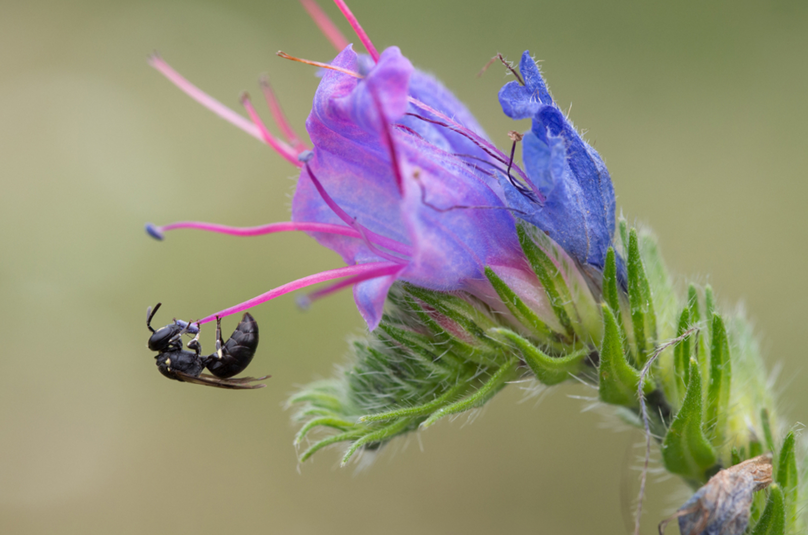 Bees Have Been Added to the Endangered Species List for the First Time – How You Can Help