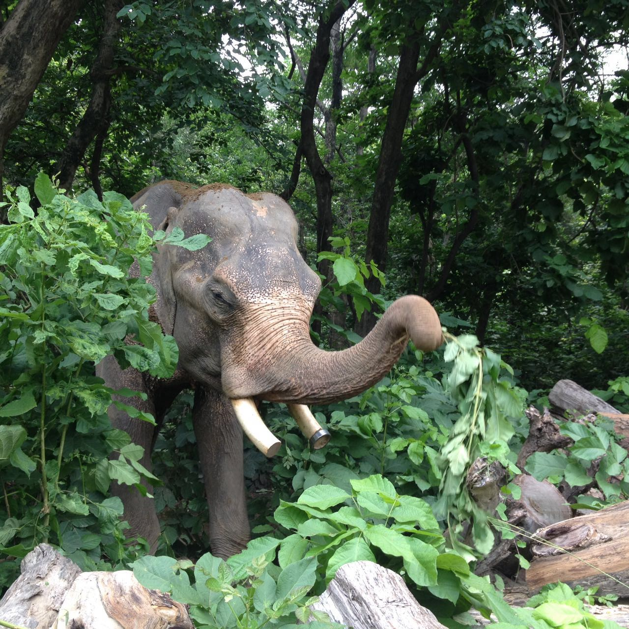 mohan-after-being-rescued