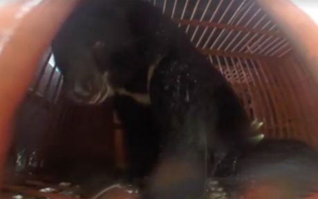 6 Moon Bears Rescued From a Bear Bile Farm Make it Home For the Holidays