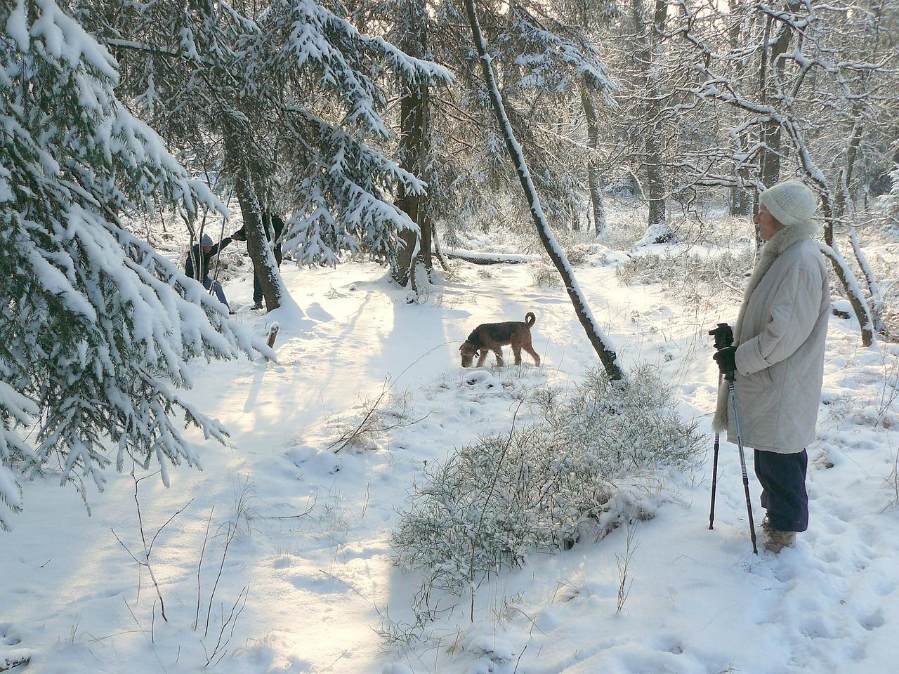 5 Ways to Help Pets Beat Winter Boredom