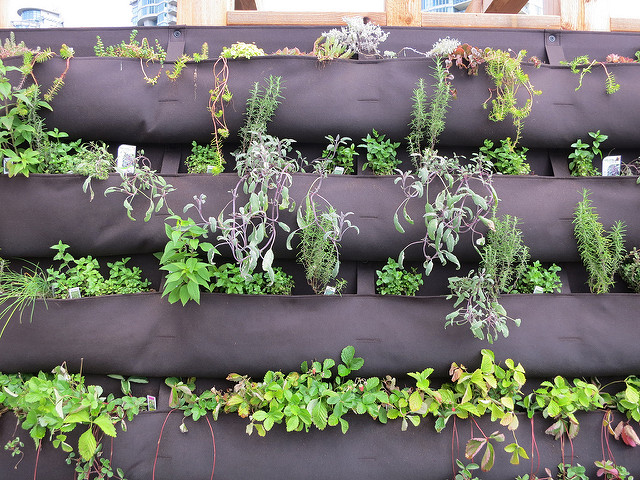 small container vertical garden - Ruth Hartnup