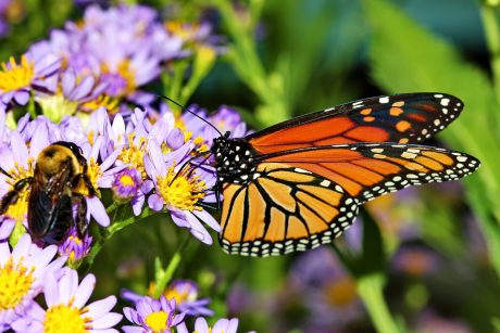 5 Ways We Can Help Save Bees and Monarchs