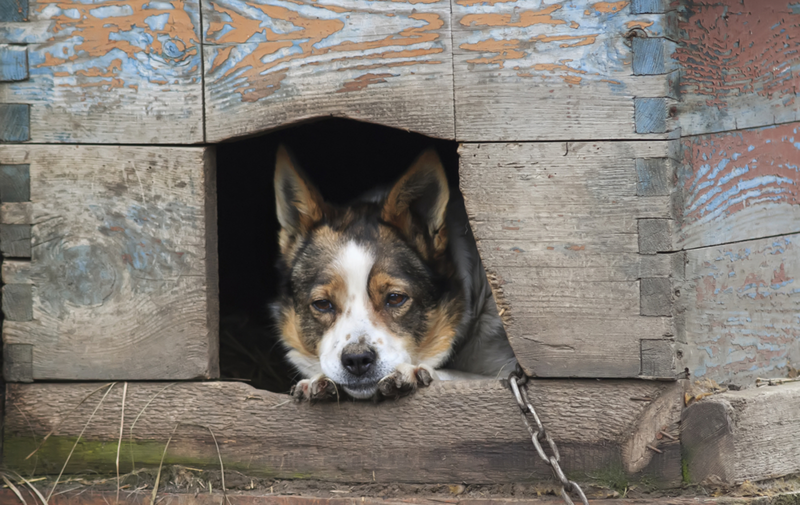 What the Removal of USDA's Animal Welfare Database Means –and Why You Need to Care