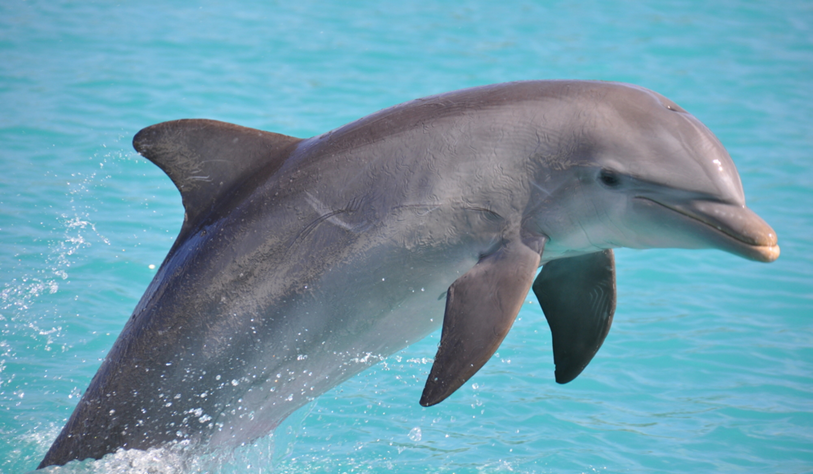 5 Ways You Can Get Indonesian Airline to Stop Cruel Dolphin Shipments!