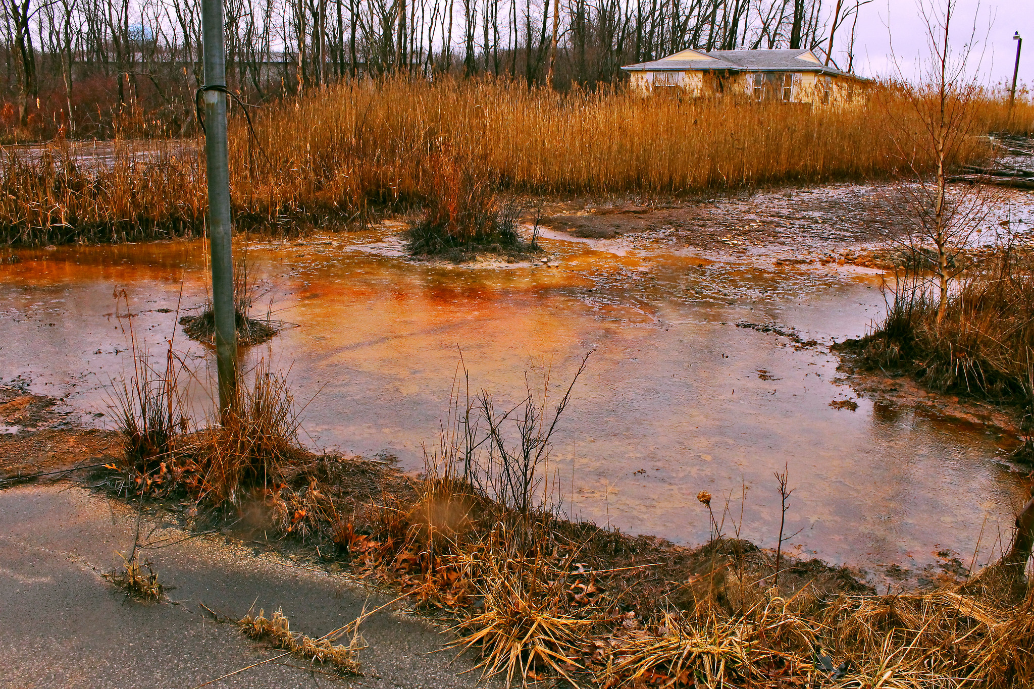 How the Pollution of Our Lakes, Rivers and Streams Harms Our Ecosystems