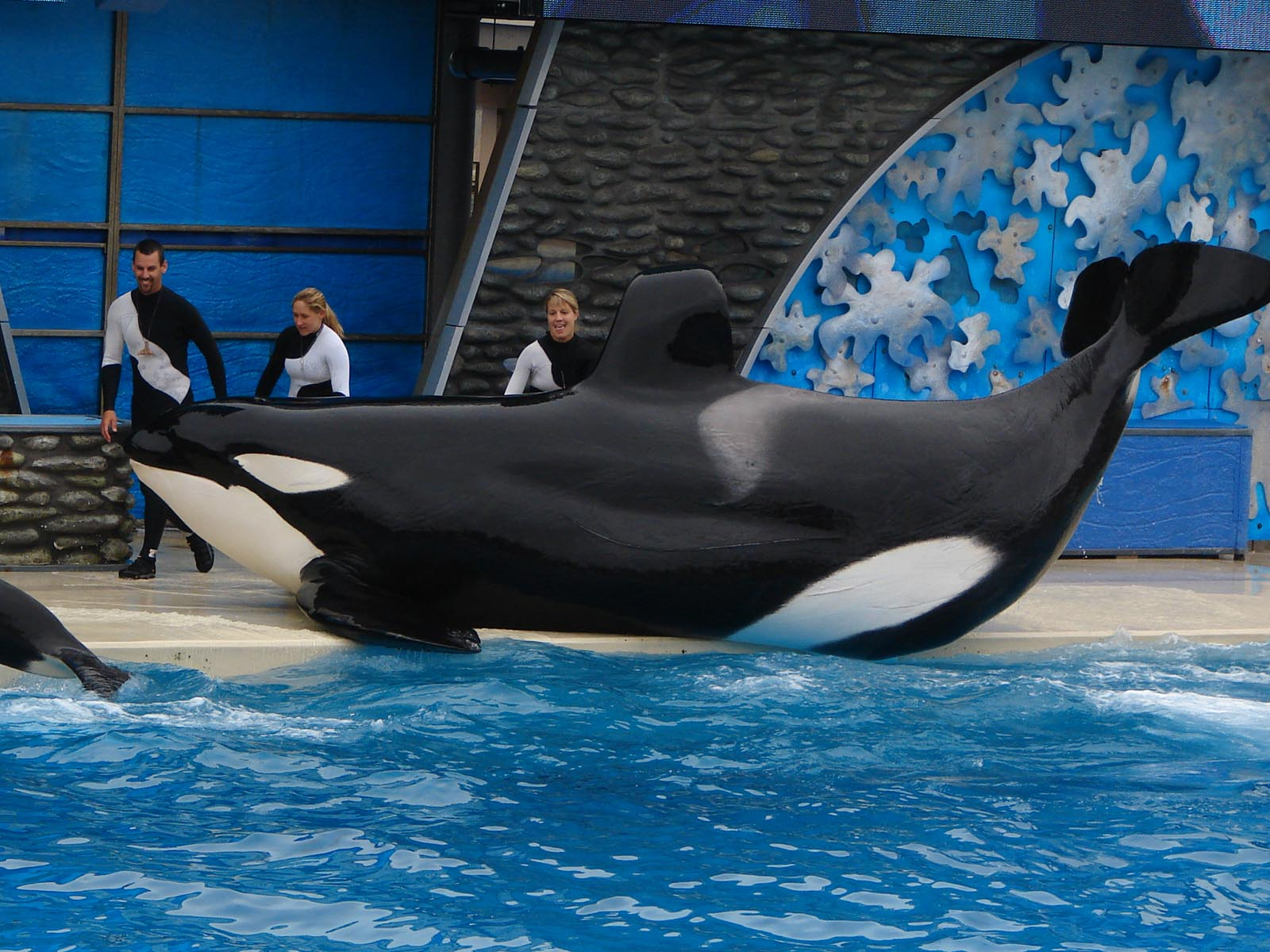 After 'Blackfish', What is the Future of the World's Marine Parks?