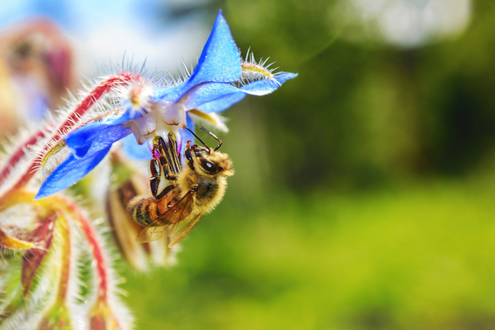 10 Plants to Have in the Garden to Attract Bees this Spring