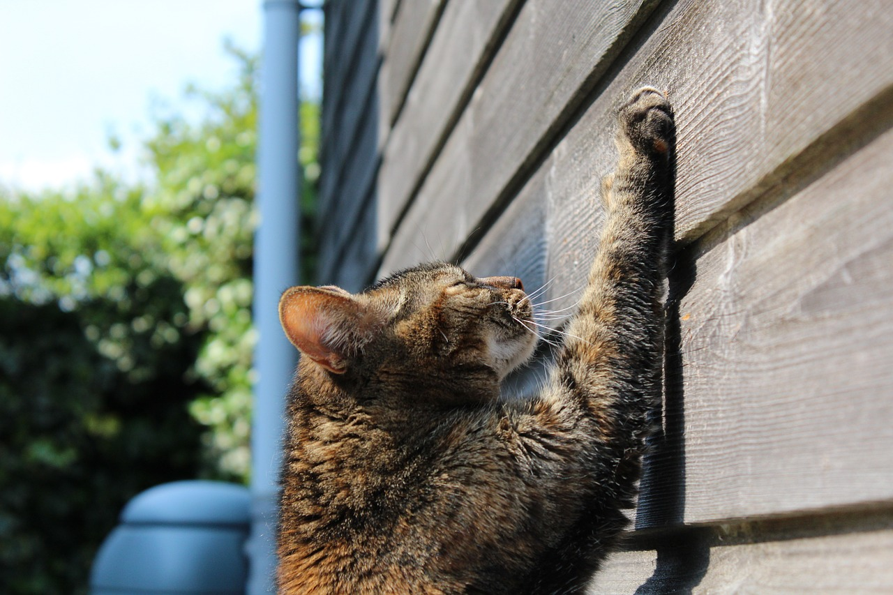 Is Declawing Your Cat a Crime? Some States Think it Should Be