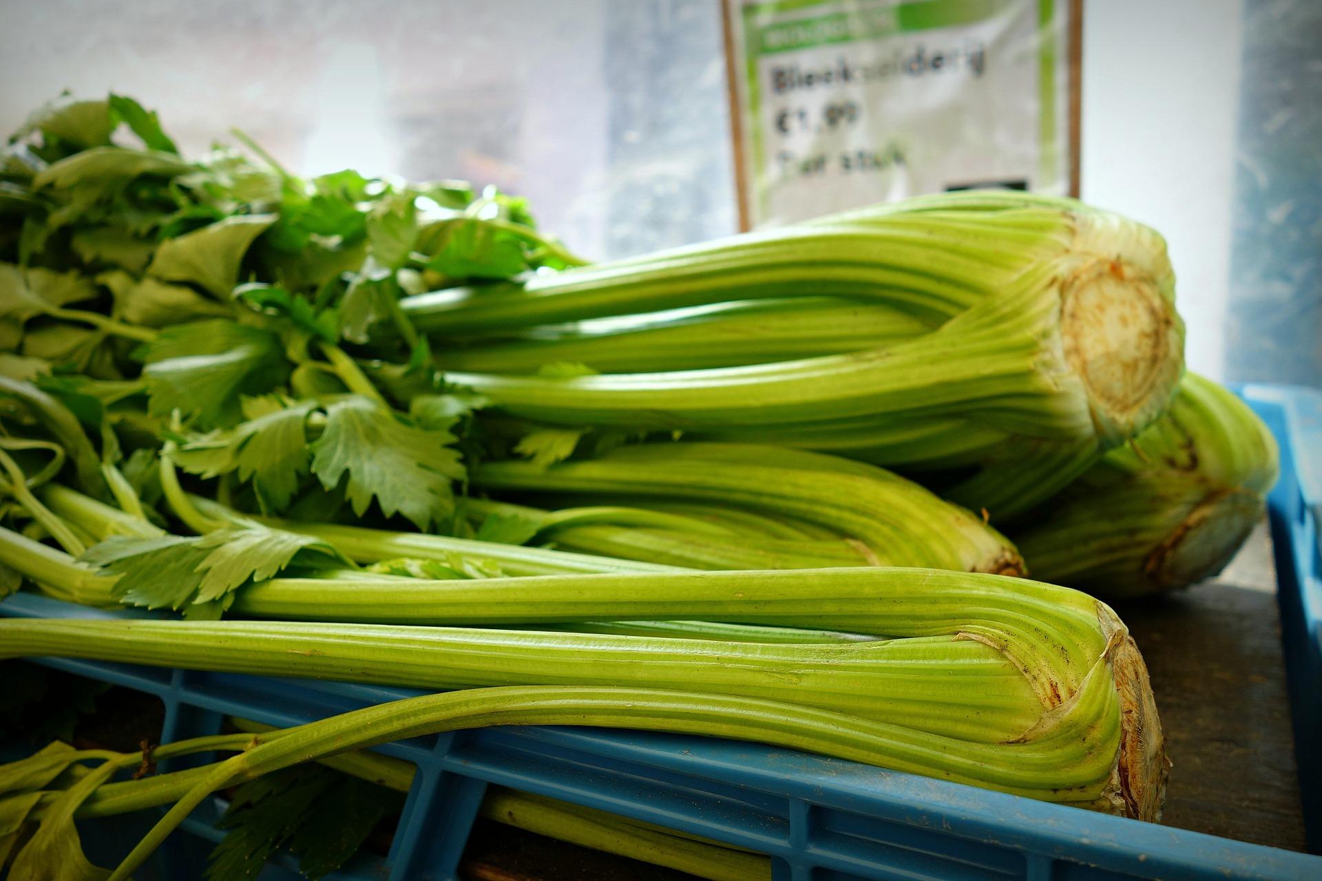 celery-1521976_1920
