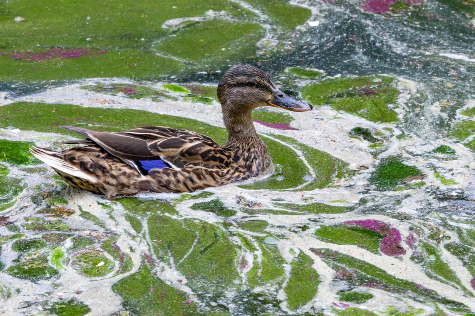 Pollution in Our Waterways is Harming People and Animals – How Can You Stop This!