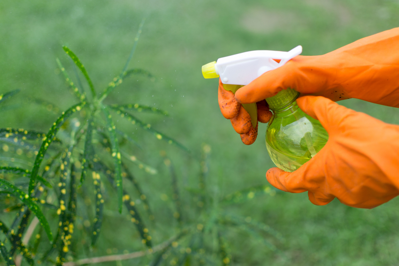 Three Chemical-Free Sprays for Repelling Pests in the Garden