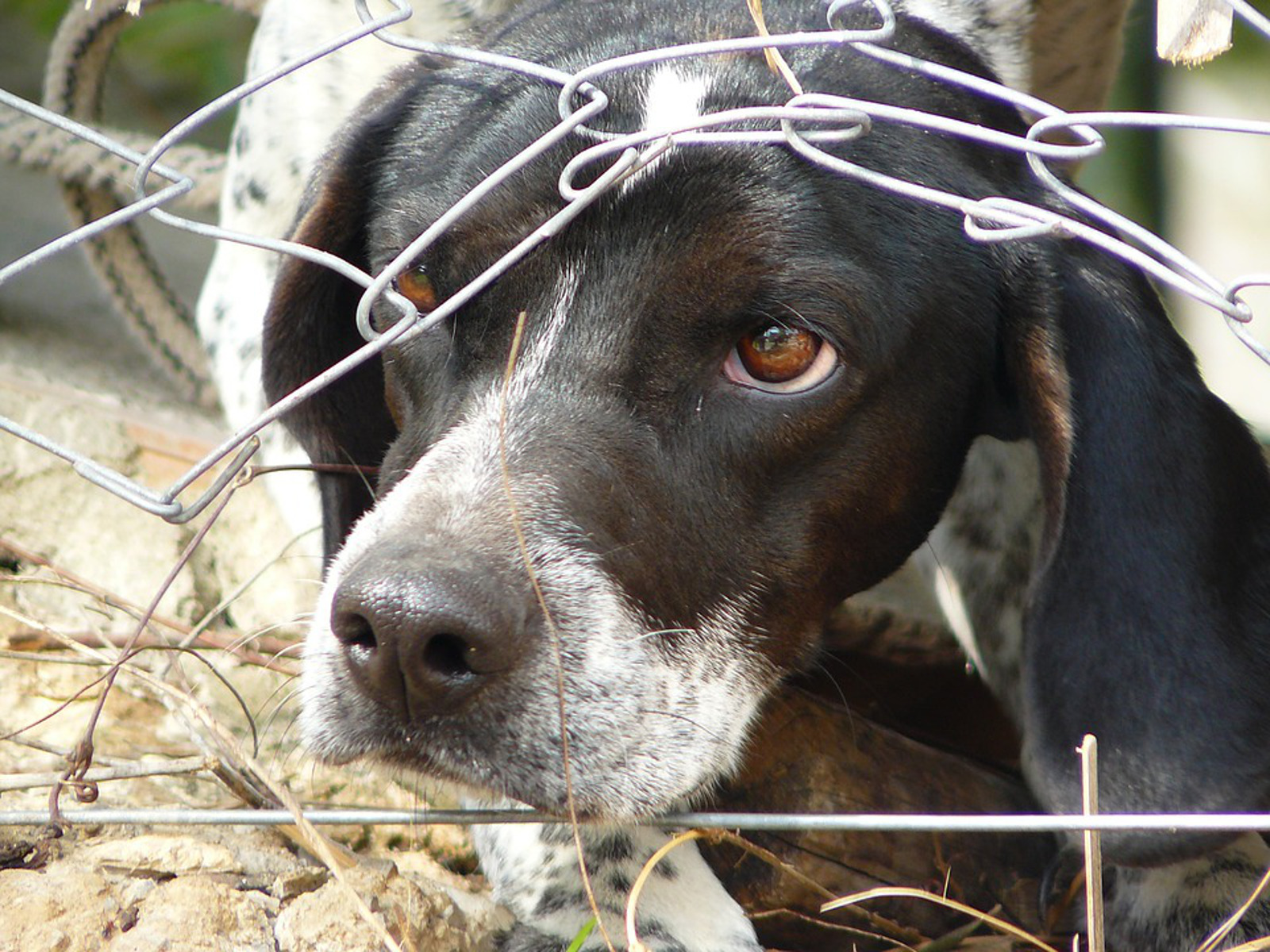 Support This Petition to End the Sale of Puppy Mill Dogs in Pet Stores!