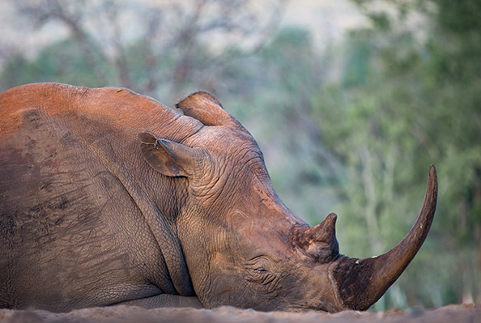 Using Photography to Come Face to Face With Poaching