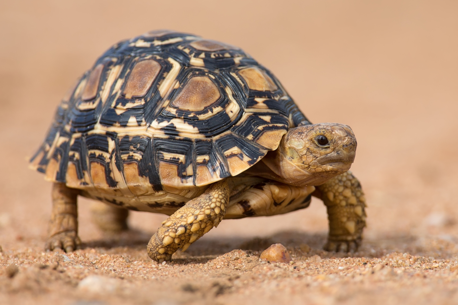 What It's Like to Save Tortoises From the Illegal Wildlife Trade in Tunisia and Europe