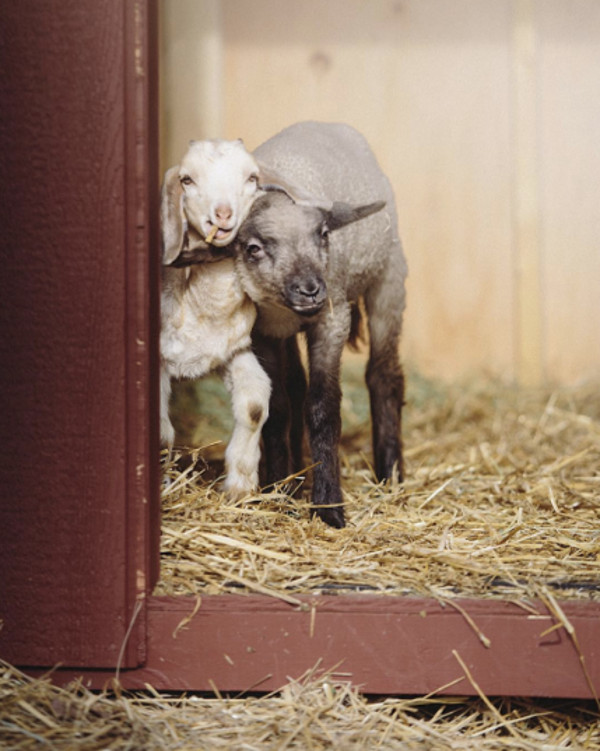 This Ground-Breaking Photographer is Helping Animals With Every Click