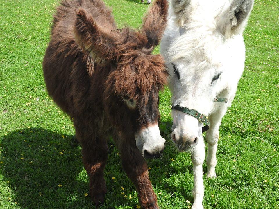 Hamish and Darcey