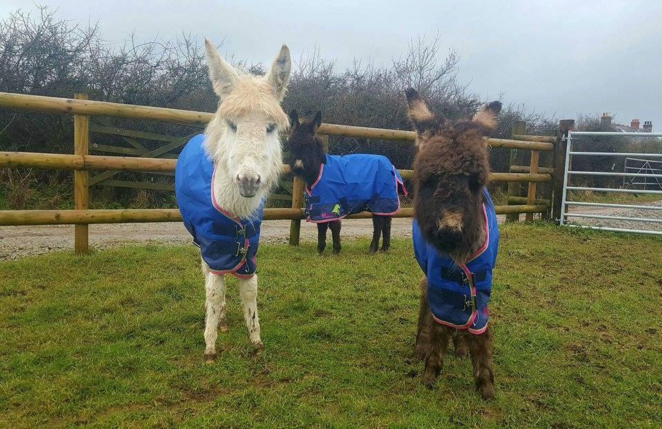 Hamish & co new coats