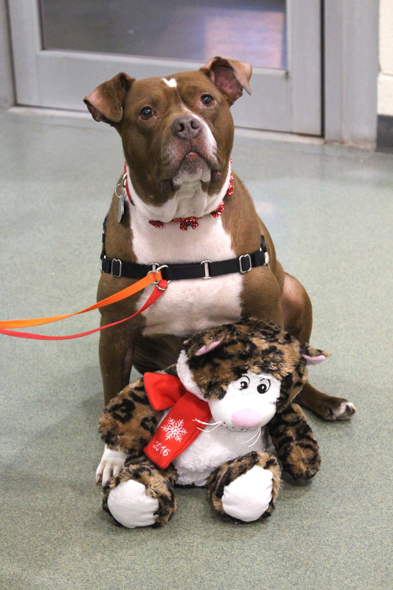 Lady in the shelter with her stuffed animal